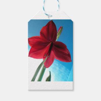 Etiqueta Para Presente flor vermelha vívida do Amaryllis 108a