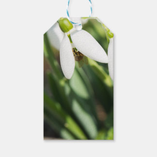 Etiqueta Para Presente Flores de Snowdrops