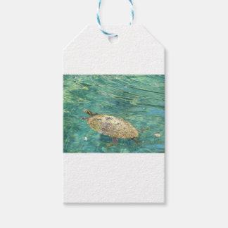 Etiqueta Para Presente grande natação da tartaruga do rio