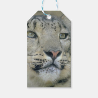 Etiqueta Para Presente leopardo de neve