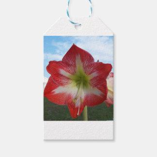 Etiqueta Para Presente MegaStar2 vermelho e branco do Amaryllis 106a