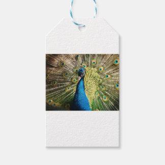 Etiqueta Para Presente O pavão bonito