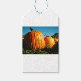 Etiqueta Para Presente Pumpkins_Hancock_Shaker_village_2418
