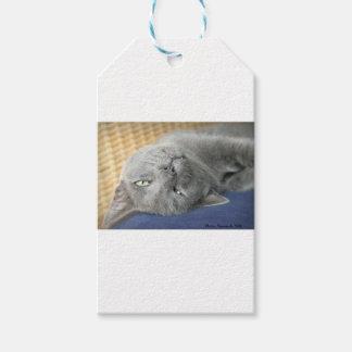 Etiqueta Para Presente Relaxe! Tag de ronrom cinzento do presente do gato