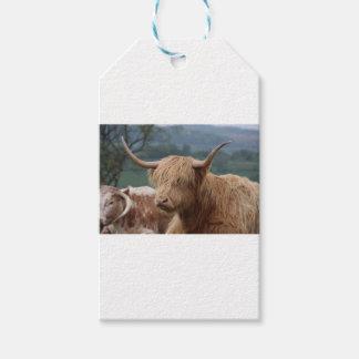 Etiqueta Para Presente retrato do gado das montanhas