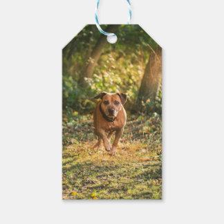 Etiqueta Para Presente Staffordshire bull terrier
