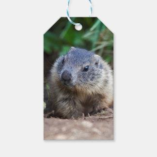Etiqueta Para Presente Tag curiosos do presente da marmota do bebê