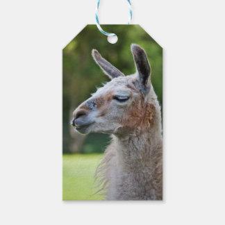 Etiqueta Para Presente Tag do presente do lama