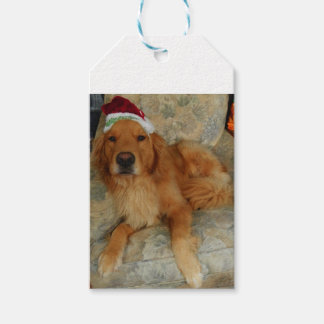 Etiqueta Para Presente Um golden retriever no Natal com chapéu do papai