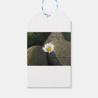 Etiqueta Para Presente Única flor da margarida branca entre as pedras