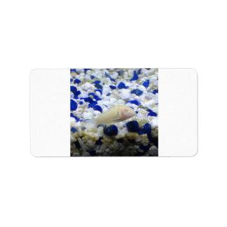 Etiqueta Peixes seixos e do gato azuis e brancos do albino