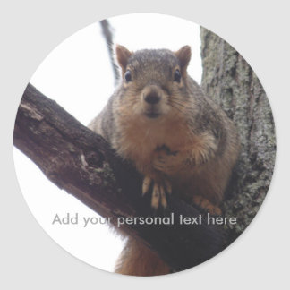 Etiqueta pessoal do esquilo
