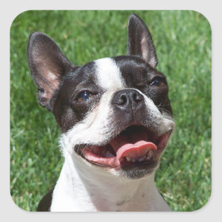Etiqueta preta & branca do cão de filhote de adesivo em forma quadrada