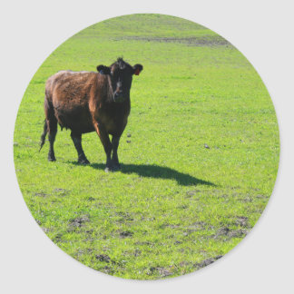 Etiqueta preta da vaca adesivo redondo