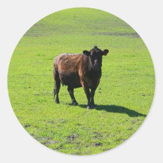 Etiqueta preta da vaca adesivos em formato redondos