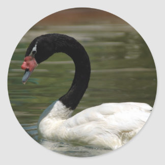 Etiqueta preto e branco da cisne adesivos redondos