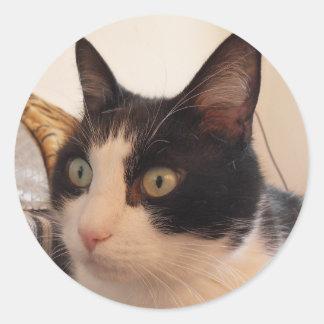 etiqueta preto e branco do gato adesivo