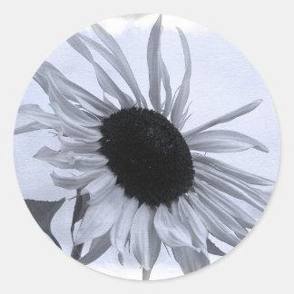 Etiqueta preto e branco do girassol adesivo