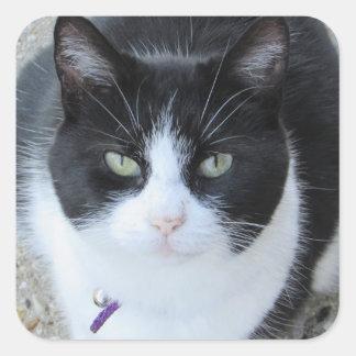 Etiqueta preto e branco parva da foto do gatinho adesivo quadrado