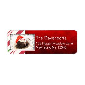 Etiqueta Pug bonito do filhote de cachorro em um Natal