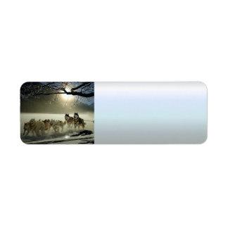 Etiqueta Raça ronca do Alasca do trenó do cão