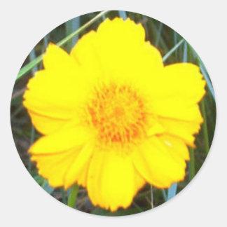 Etiqueta redonda clássica da flor amarela