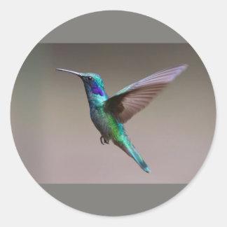 Etiqueta redonda clássica do pássaro do zumbido,
