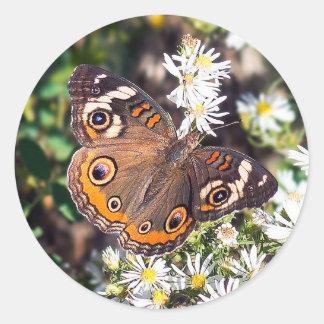Etiqueta redonda da borboleta do Buckeye