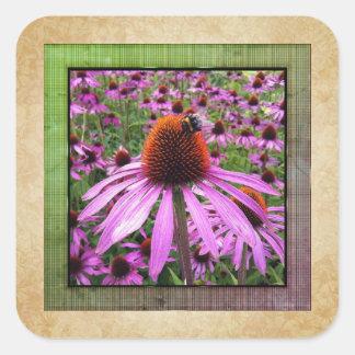Etiqueta roxa do Wildflower do Echinacea de