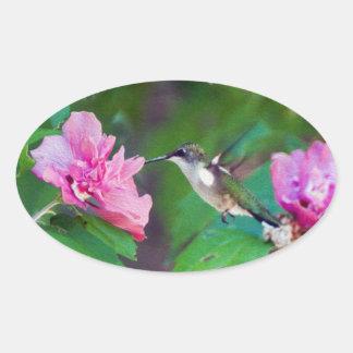 Etiqueta Rubi-Throated do colibri