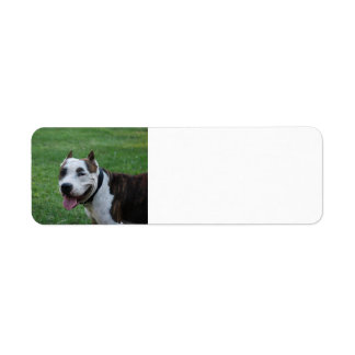 Etiqueta sorriso americano do terrier de pitbull