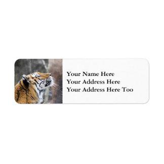 Etiqueta Tigre Wistful do inverno