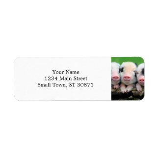 Etiqueta Três porcos pequenos - porco bonito - três porcos