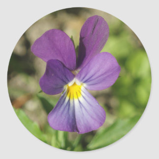 Etiqueta violeta bonita da foto da flor adesivo