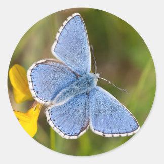 Etiquetas azuis bonitas da borboleta de Adonis