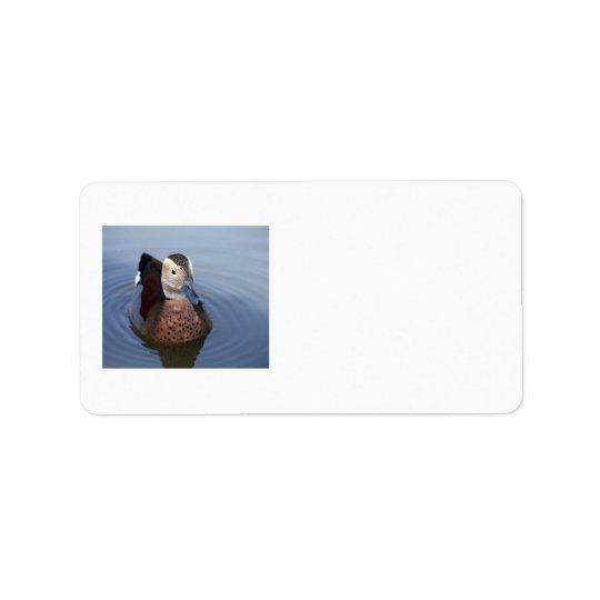 Etiquetas bonitas do vazio da foto da cerceta etiqueta de endereço