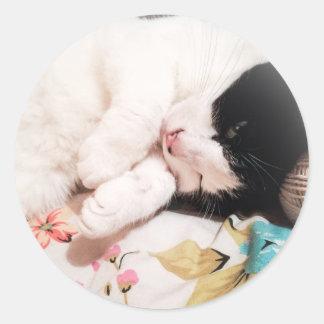 Etiquetas bonitos da foto do gato adesivo