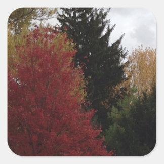 Etiquetas coloridas do costume das árvores do