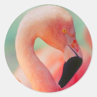 Etiquetas cor-de-rosa exóticas do pássaro do