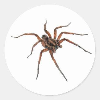 Etiquetas da aranha