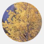 Etiquetas da árvore do álamo tremedor da queda adesivos redondos