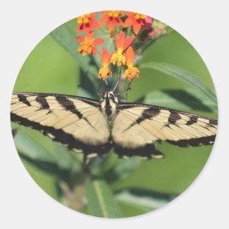 etiquetas da borboleta
