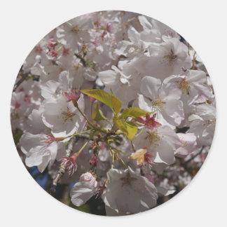 Etiquetas da flor de cerejeira de Sakura