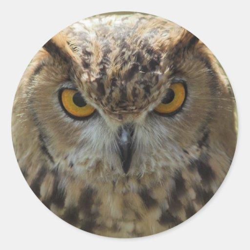 Etiquetas da foto da coruja adesivos em formato redondos