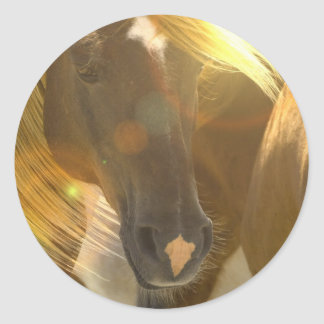 Etiquetas da foto dos cavalos selvagens adesivo redondo