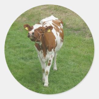 Etiquetas da vaca adesivo redondo