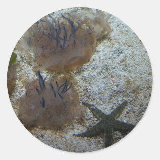 Etiquetas de cabeça para baixo das medusa
