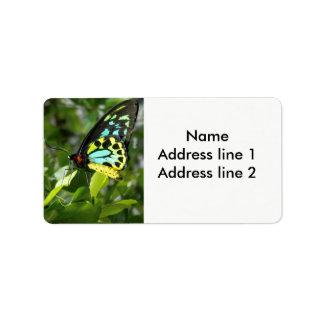 Etiquetas de endereço da borboleta etiqueta de endereço