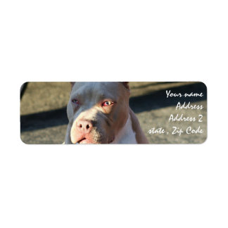 Etiquetas de endereço de Staffordshire Terrier ame Etiqueta Endereço De Retorno