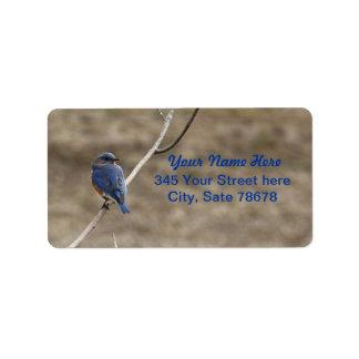 Etiquetas de endereço do Bluebird Etiqueta De Endereço